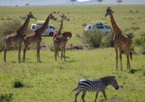 African kenya vat zimbabwe journalists tourism