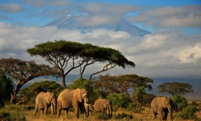 kenya safari dreams