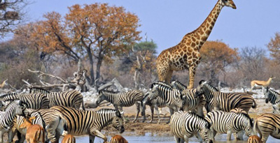 Namibia tourism Africa