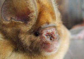 bats scientists